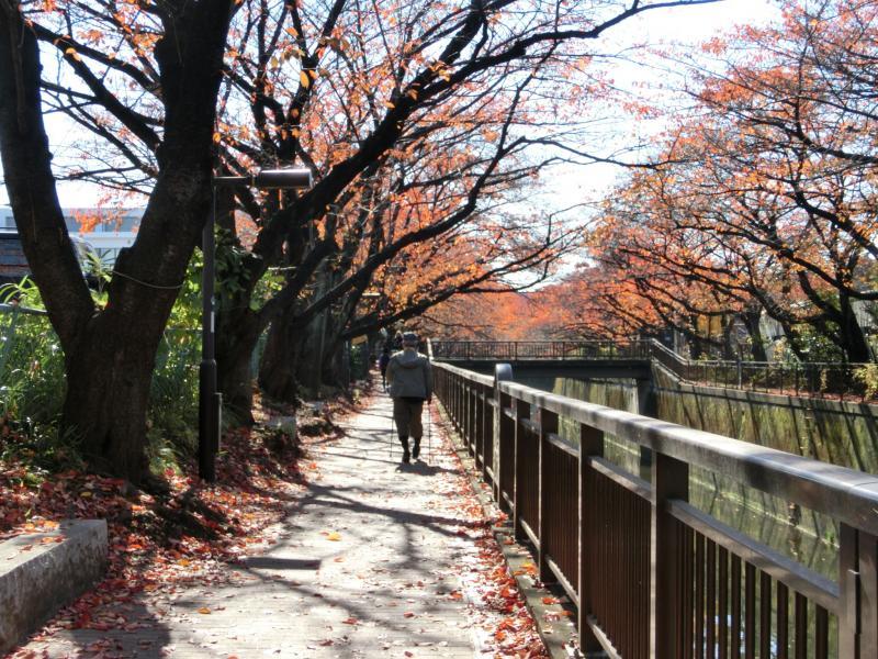 仙川沿いを行く