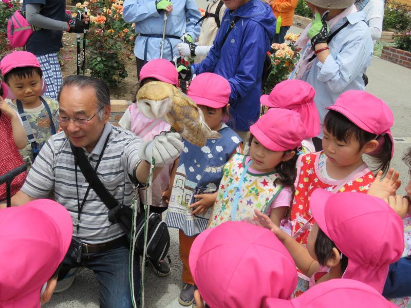 バラ園で幼稚園生とフクロウ