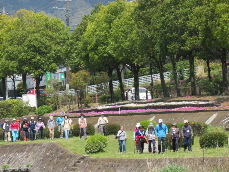 水無川の芝桜の前