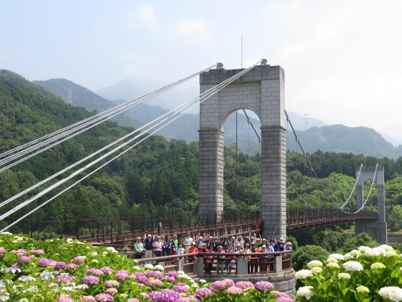 風のつり橋をバックに、前には紫陽花