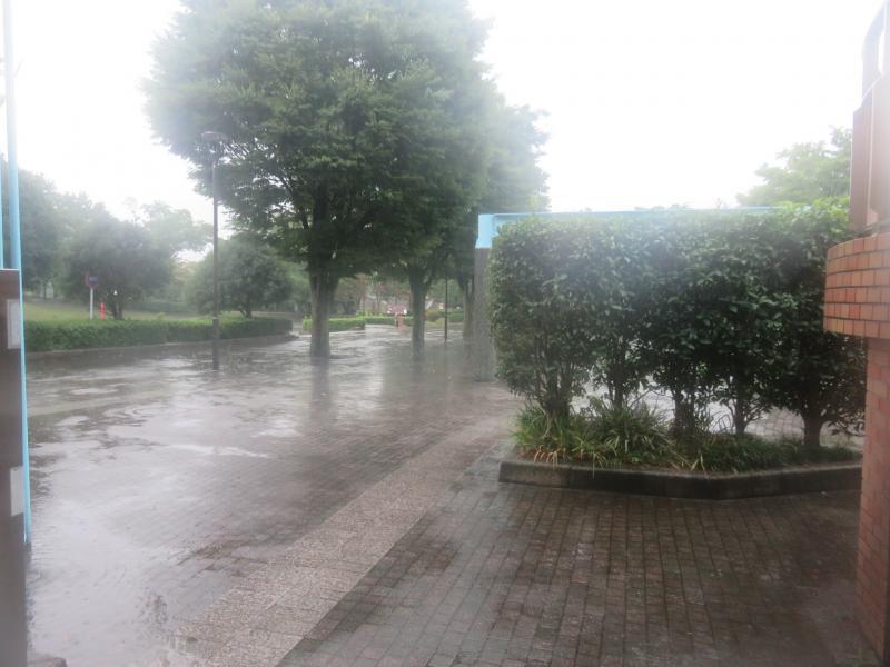 この降りでは中止です