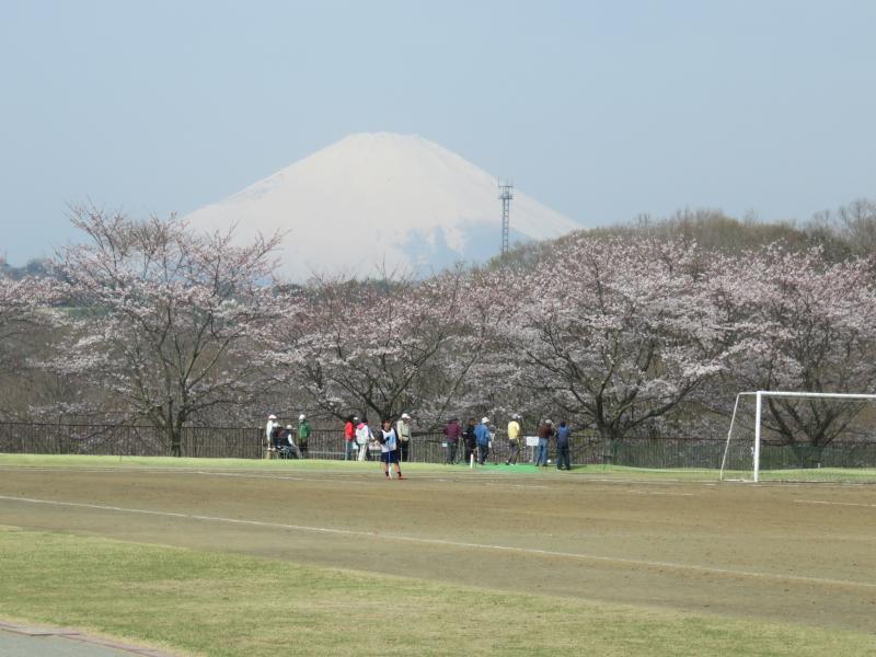 富士と桜、日本ですね。
