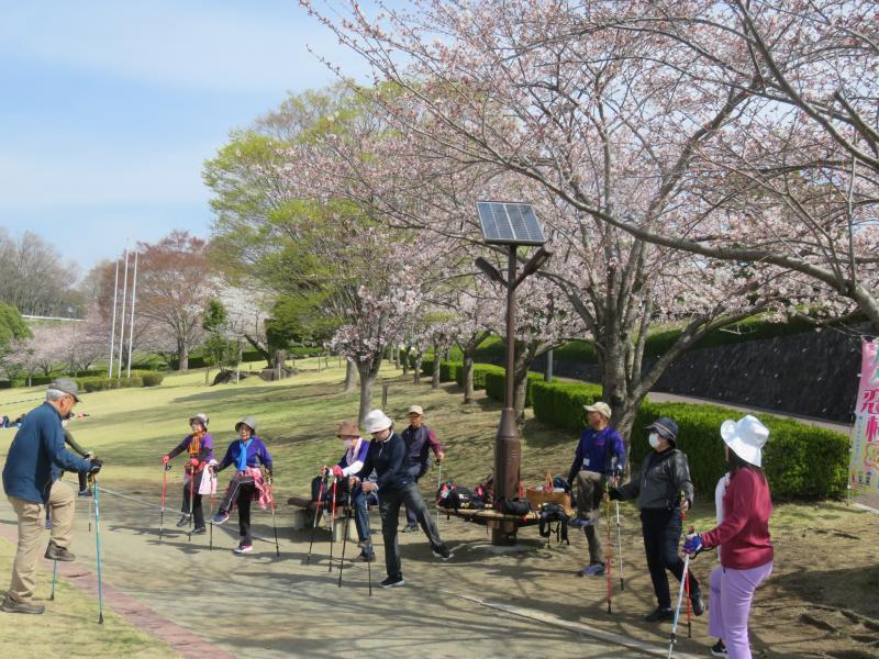 ウォーミングアップも桜に下で
