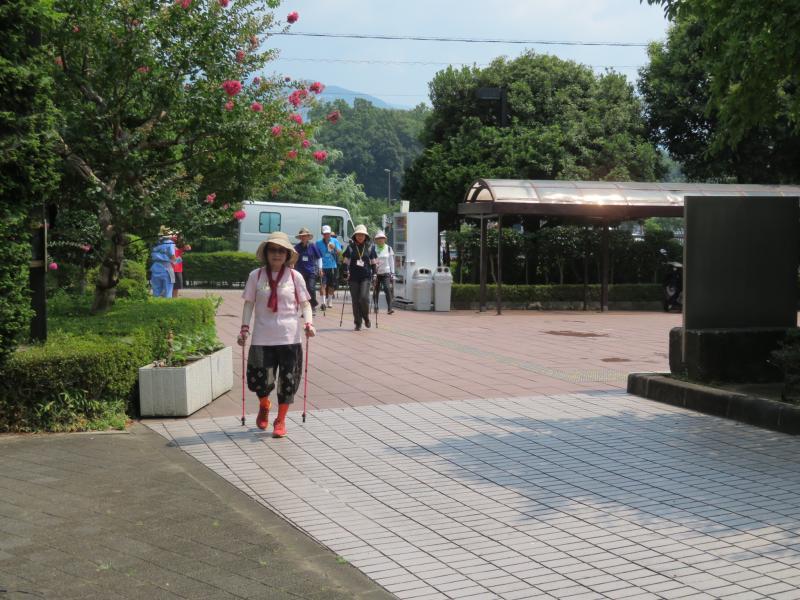 古墳公園到着(百日紅の花)