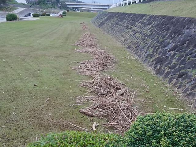 流れついた草木類