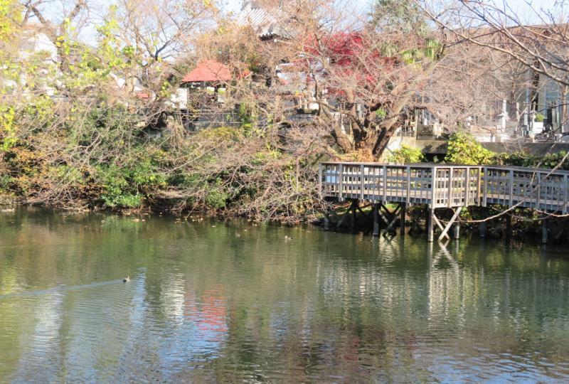 今泉名水桜公園(湧水池)