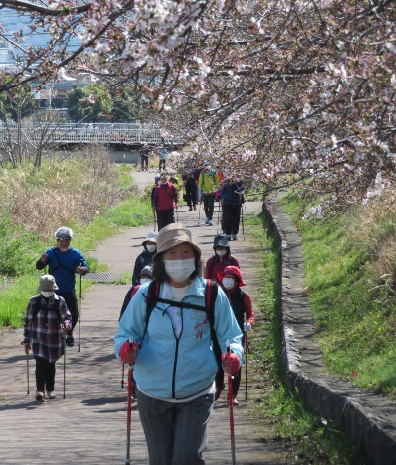 この付近はそろそろ桜が見頃です