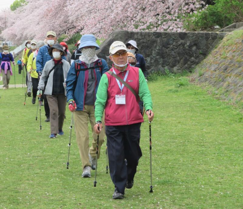 上流に向かうので桜を左に見て