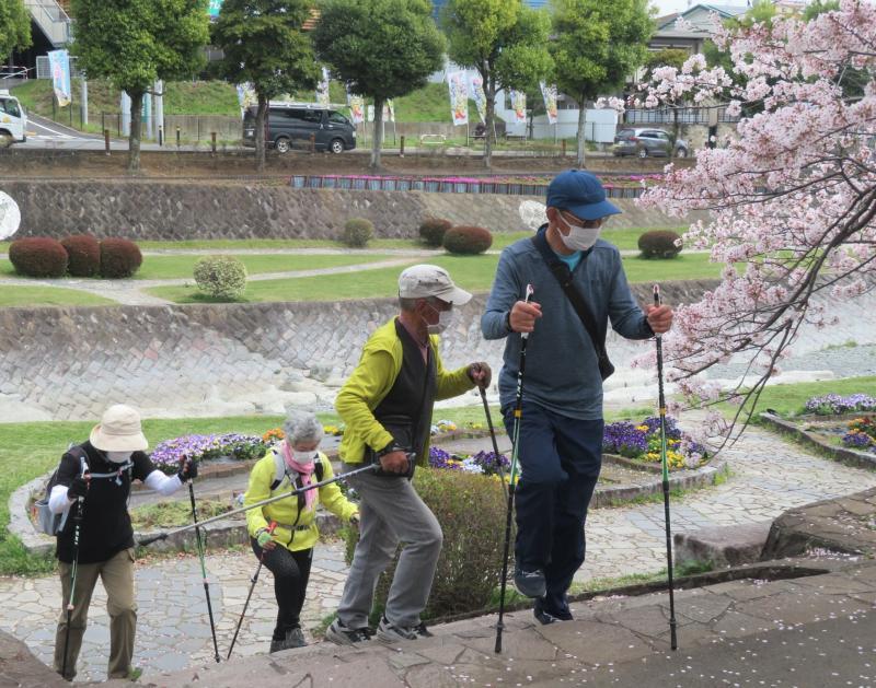 来年の桜はどうでしょうか。