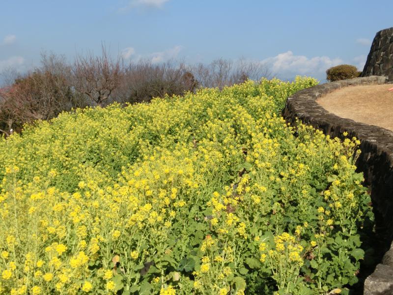 菜の花は3月まで見ごろらしい