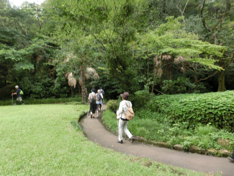 芹が谷公園は緑が多い
