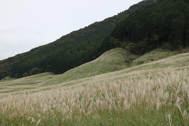 すすき高原