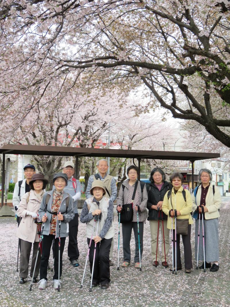 小田急桜ヶ丘駅の桜