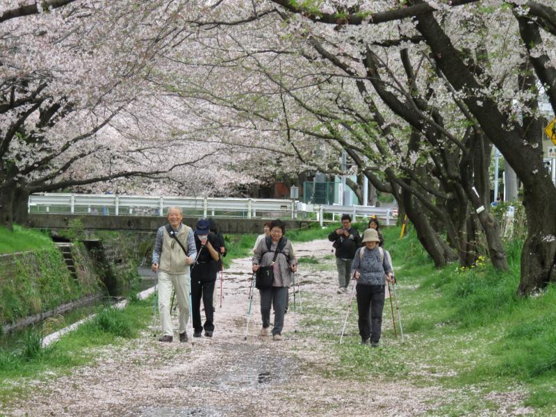 引地川の桜道
