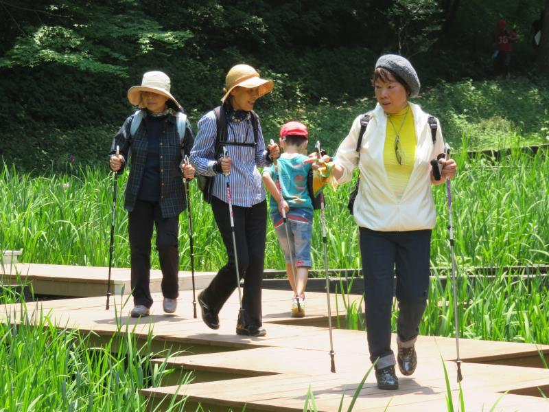 菖蒲園(まだ2分咲き)