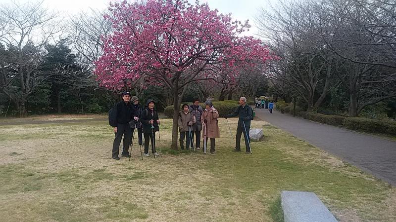 本牧桜の前で