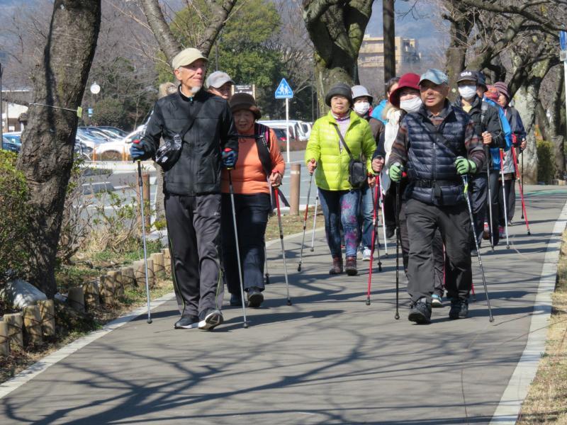 土手の桜道をゆくうさぎグループ