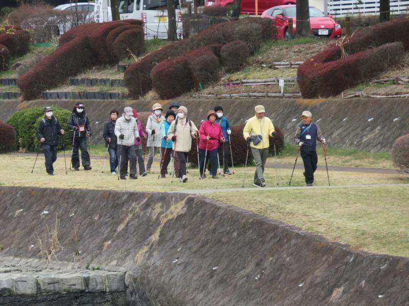 うさぎさんグループは水無川緑道