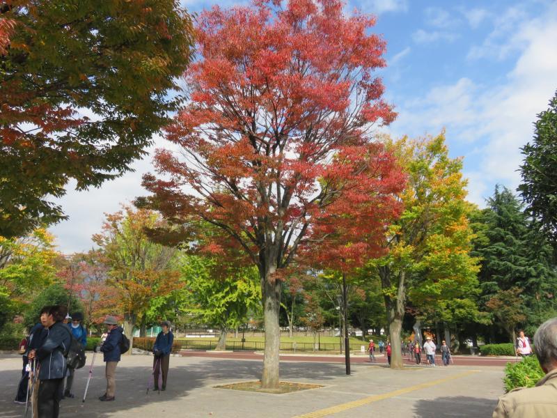 体育館前の木々も紅葉