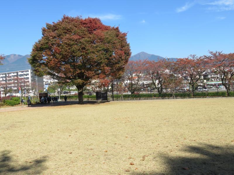 ピクニック広場から見る大山