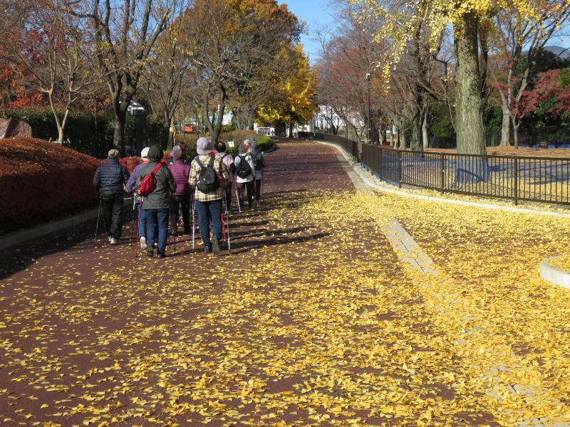 銀杏も散って黄金の道