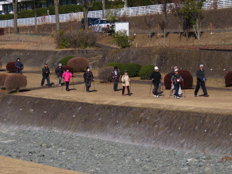 水無川左岸を行くウサギグループ