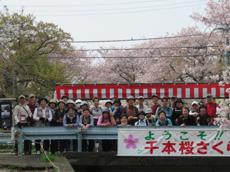 桜祭りの横断幕の前で