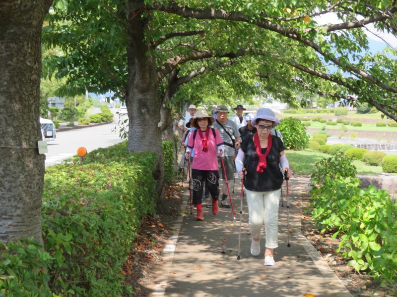 土手道は桜の木の下