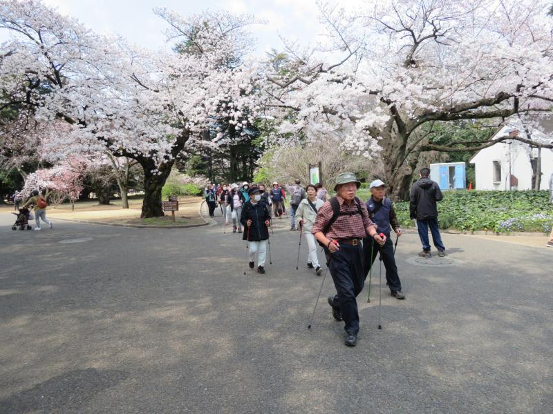 桜満開の園内を一周