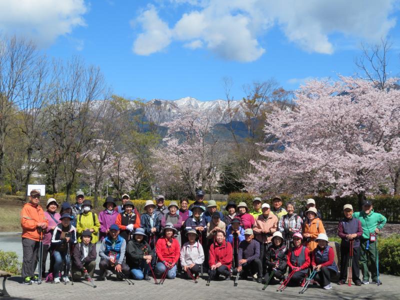丹沢の雪と桜・・秦野は美しい