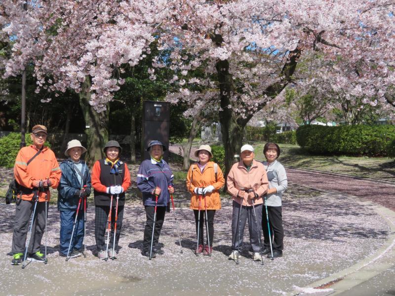 桜の下でこがめさんたち