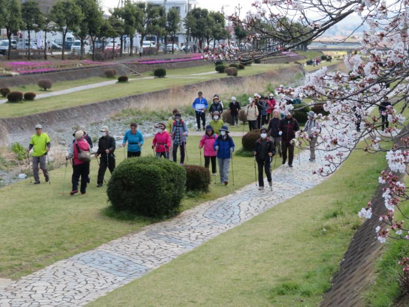 水無川の春は桜と芝桜
