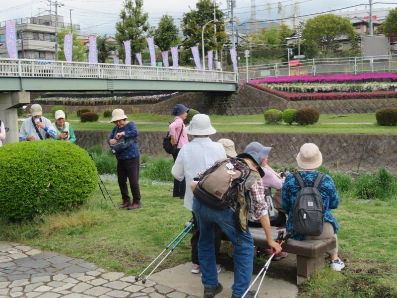 人道橋の(芝桜の幟旗)