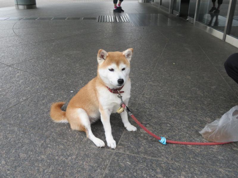 """体育館まえにいる""""はな""""ちゃん(看板犬候補?)"""