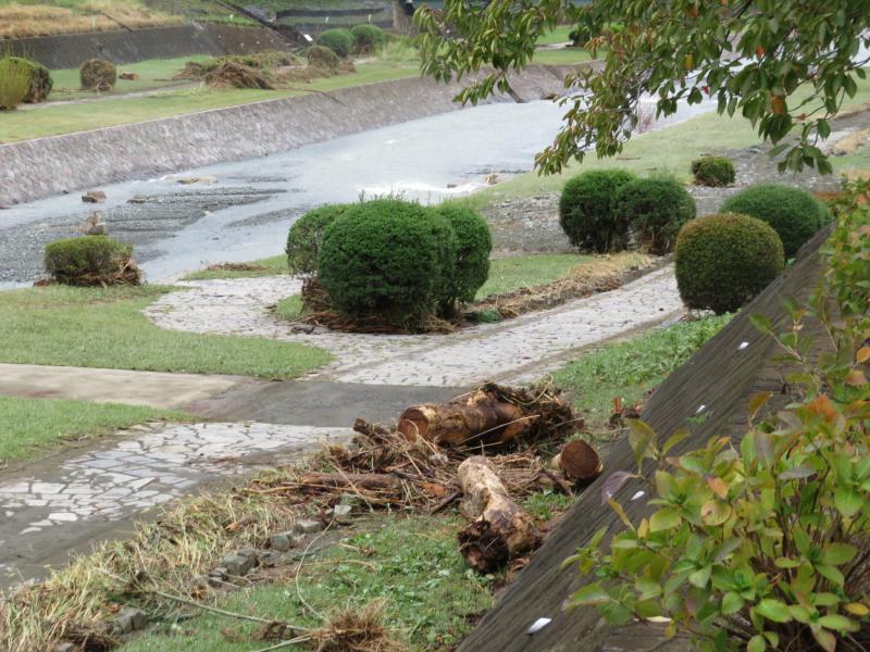 水無川も上流から流木が下がれてきた