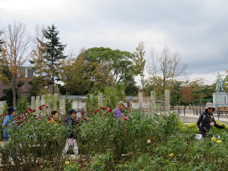 カルチャーパークのバラ園