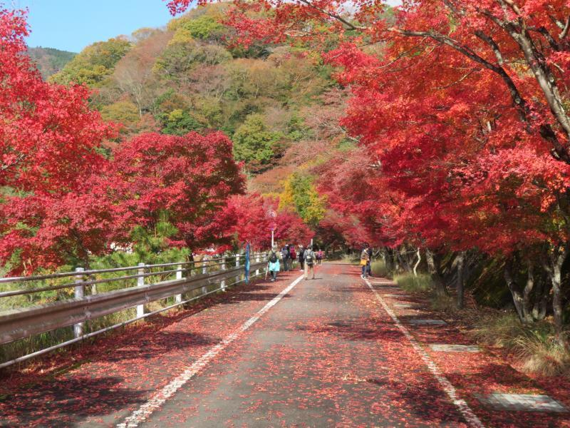 紅葉が素晴らしいです。