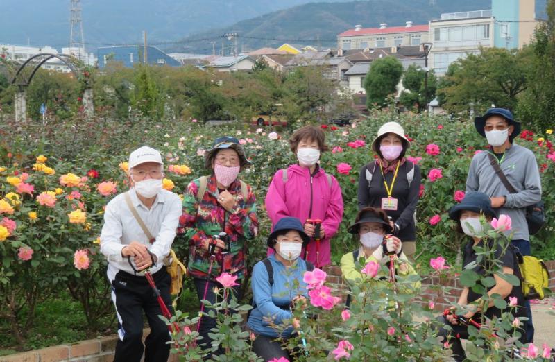 カメさんも薔薇の花の前で