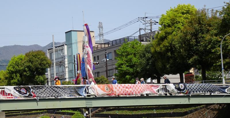 人道橋を渡るうさぎさんグループ