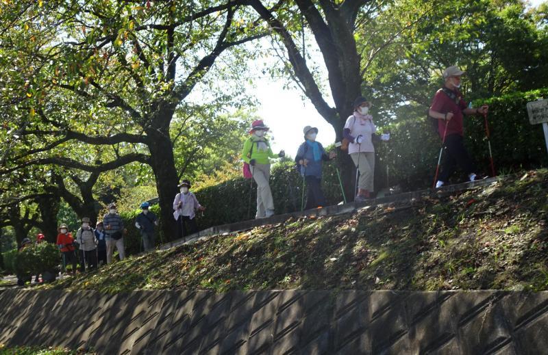 桜並木の土手